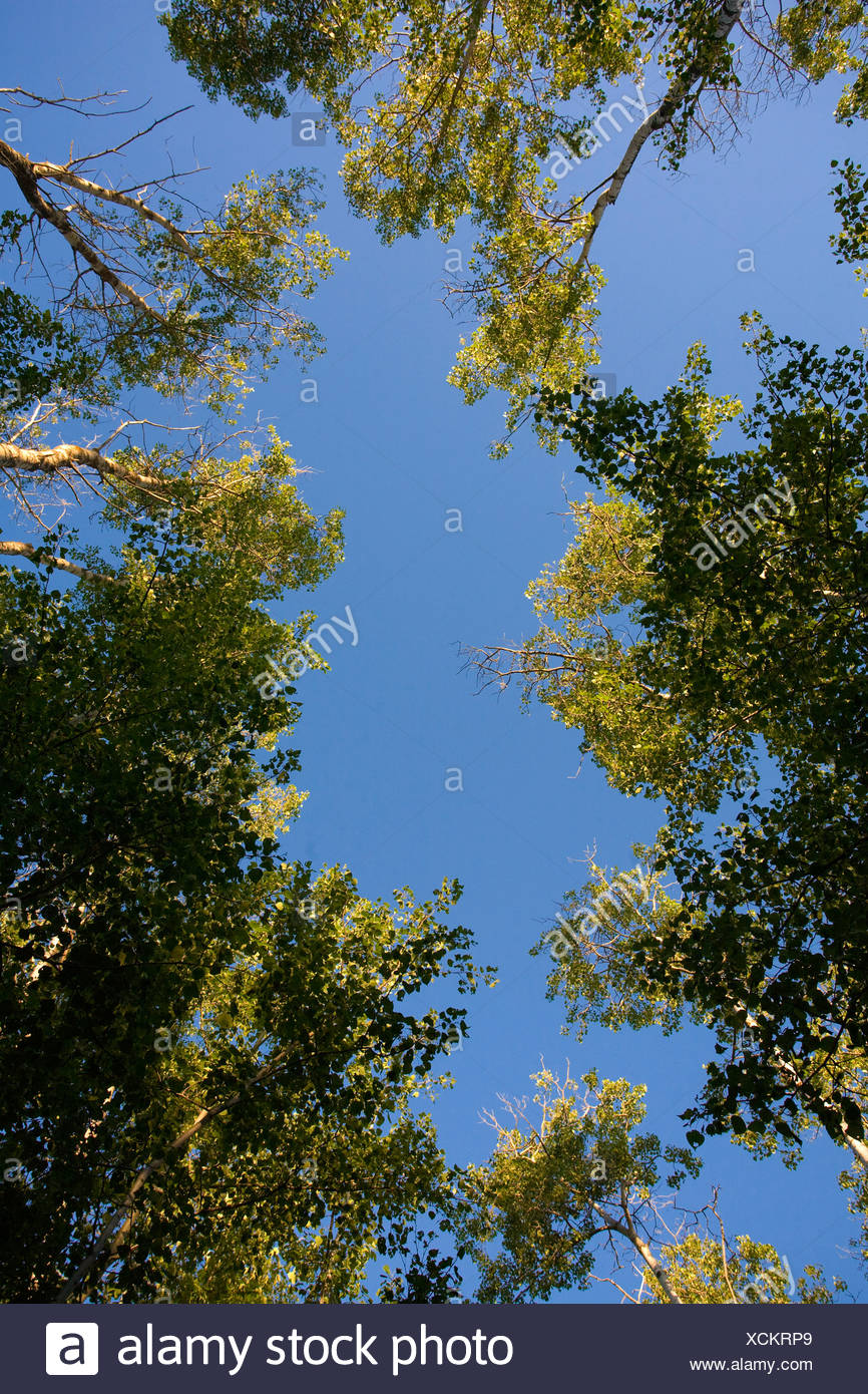 Low angle shot of trees - Stock Image