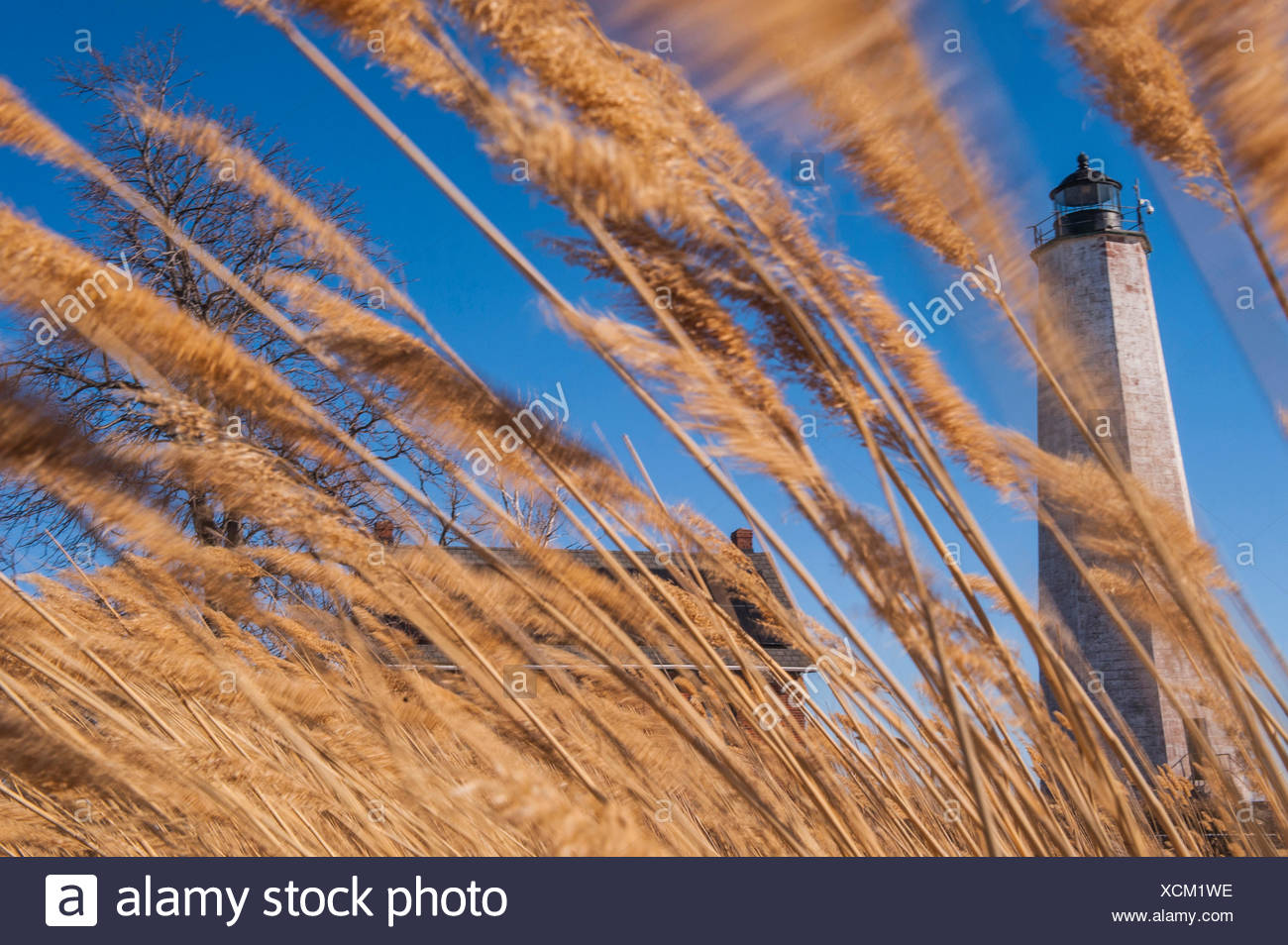 Strong winds blow reeds in front of the File Mile Point Lighthouse. Stock Photo