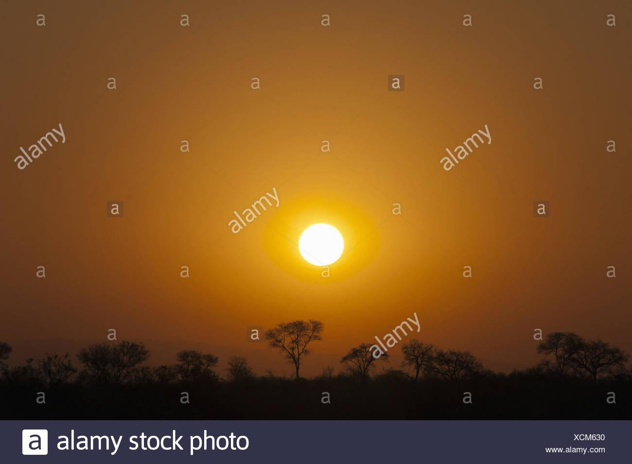 sunset over the savannah, South Africa, Krueger National Park - Stock Image
