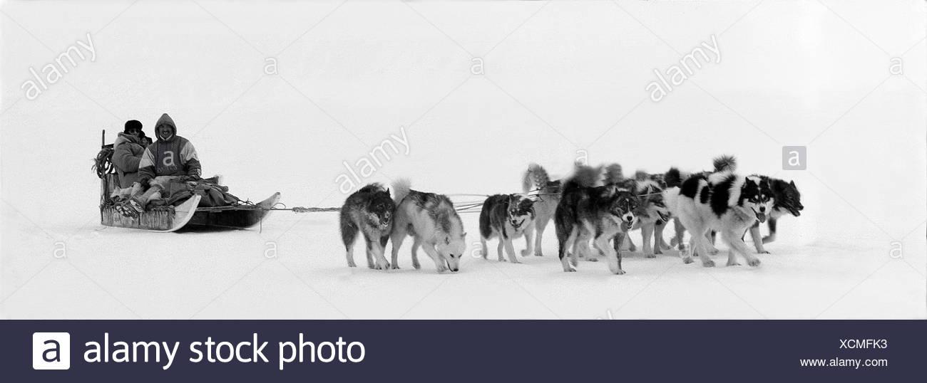 Animal - Stock Image
