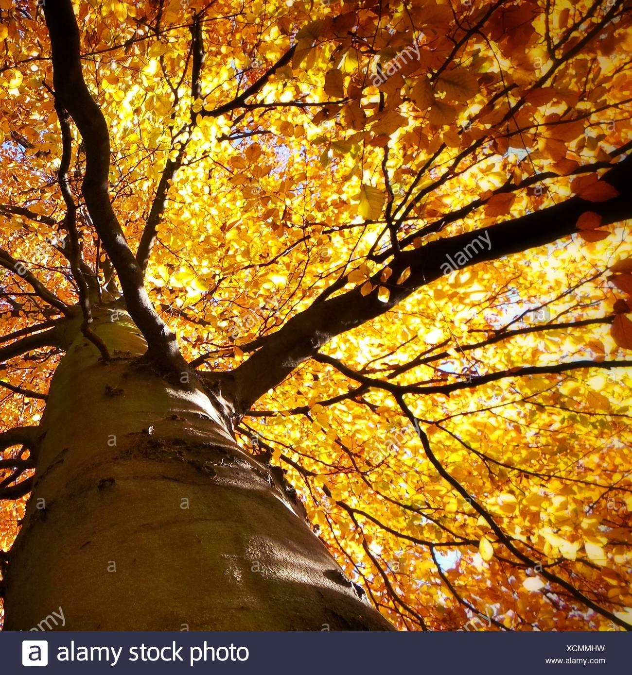 Autumn tree - Stock Image