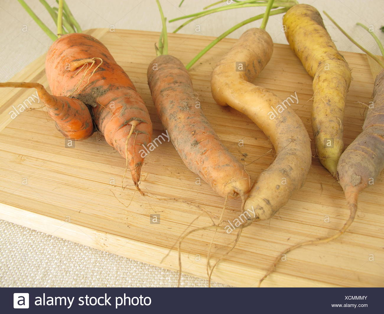 krumme colorful carrots - Stock Image