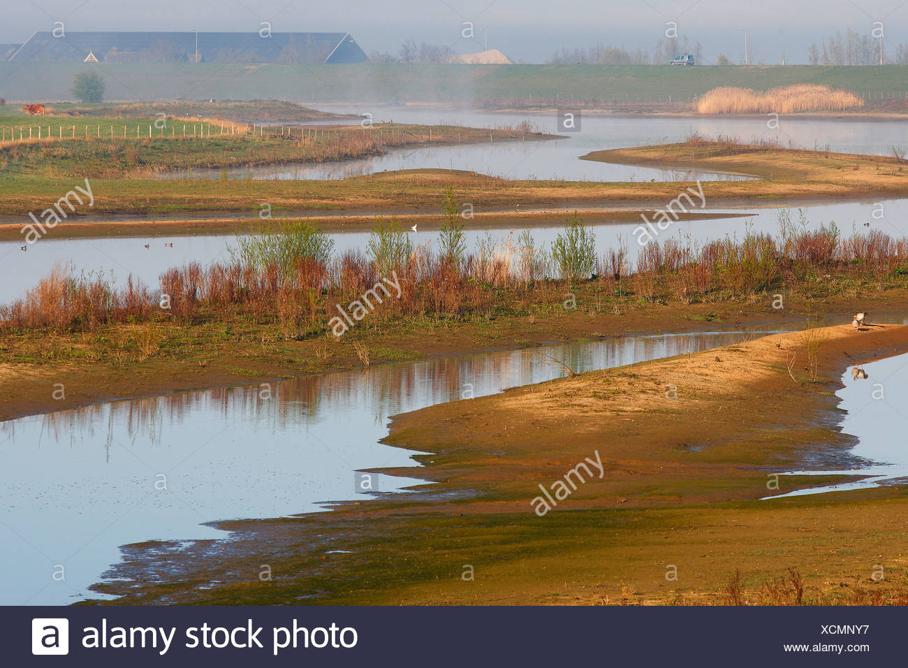 Waal river scenery, Netherlands, South Holland, Lexmond Stock Photo
