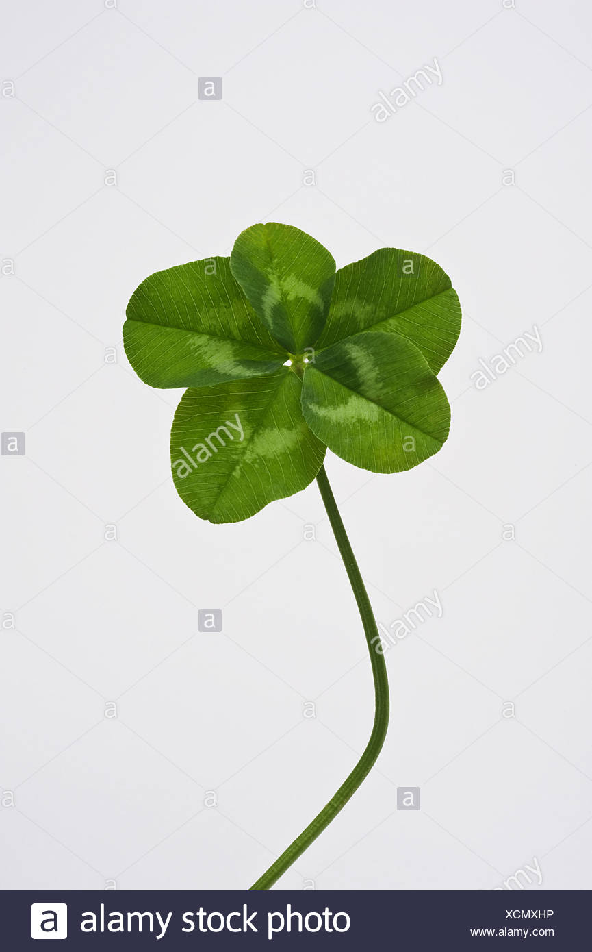 Five Leaf Clover Stock Photo 283201682