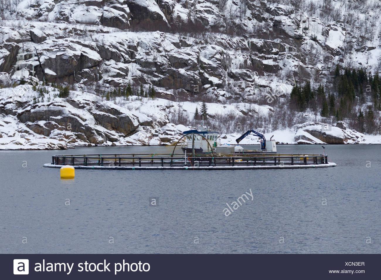 Salmon farm with characteristic cage in a Norwegian fjord.  Raftsund, Lofoten, Norwegen - Stock Image