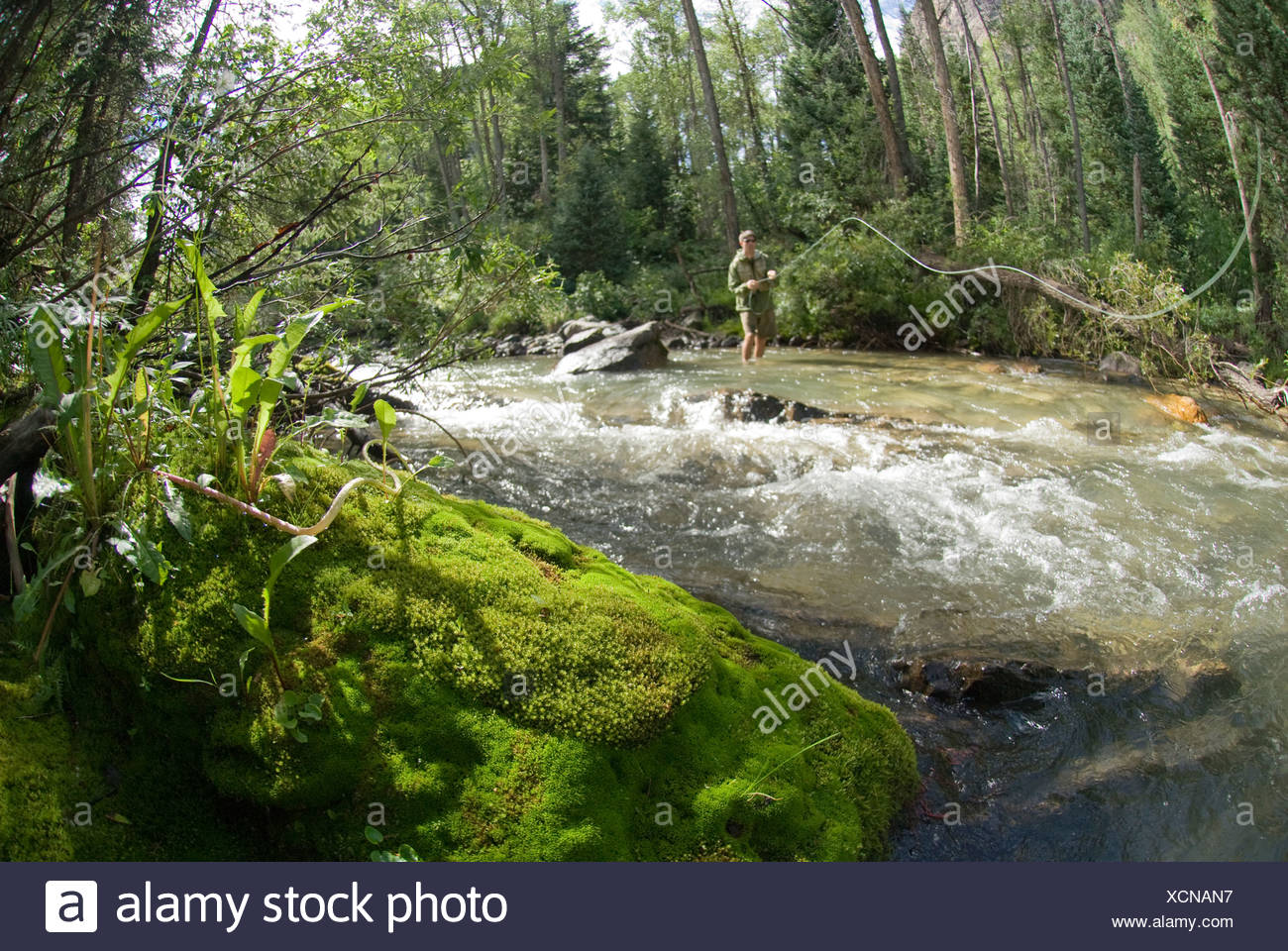 Man fly fishing the Crystal River, Marble, Colorado. - Stock Image
