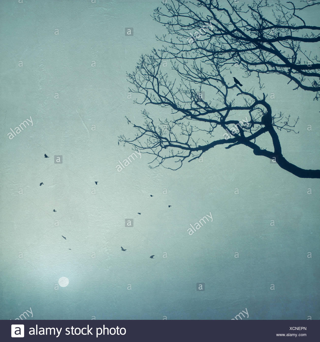 Silhouette of tree and flying birds at sunrise - Stock Image