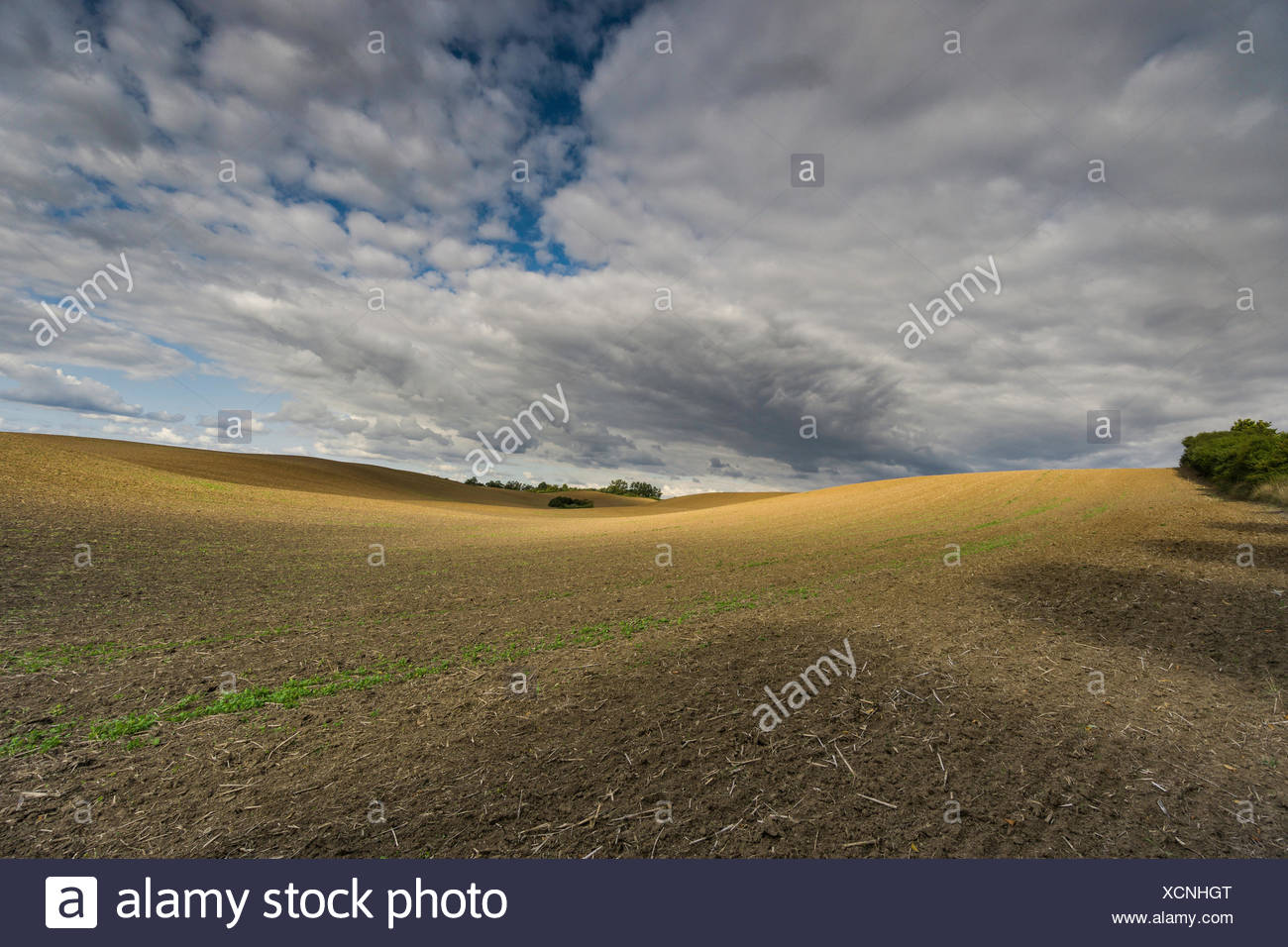 clouds on a harvested field,wandering shadow on the field and bizarre cloud formations Stock Photo