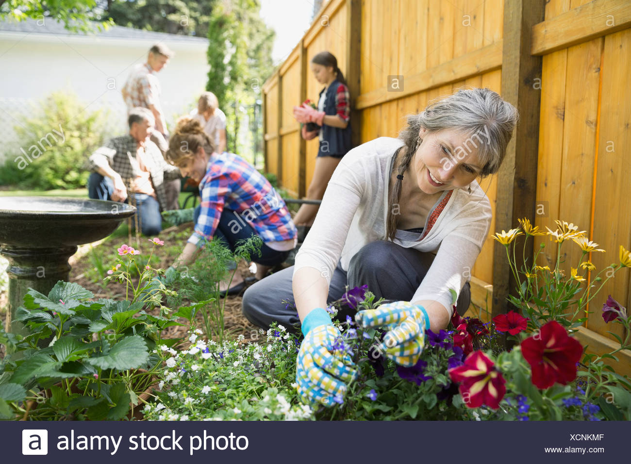 Multi-generation family planting flowers in garden - Stock Image