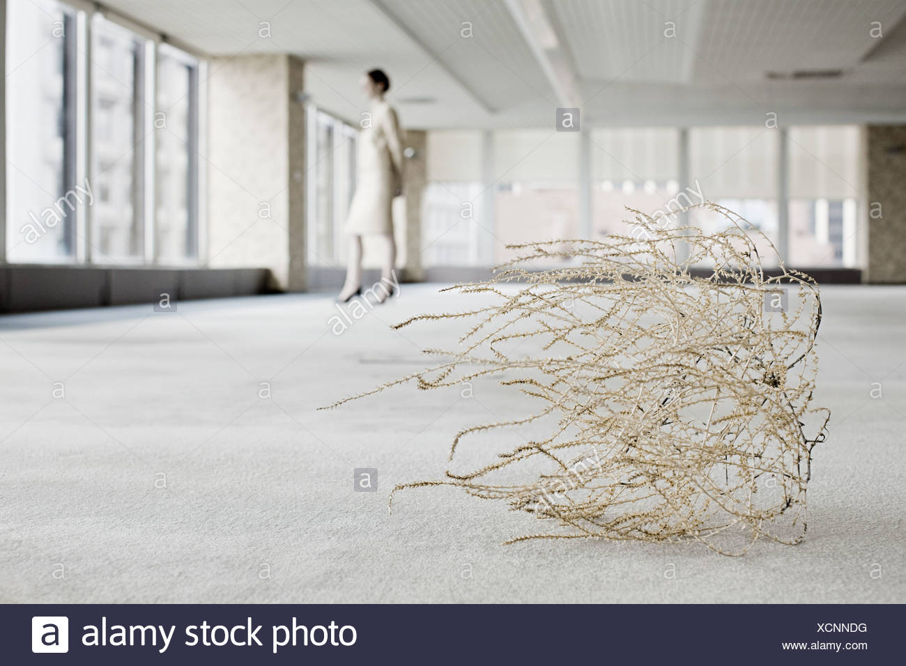 Businesswoman in office with tumbleweed - Stock Image