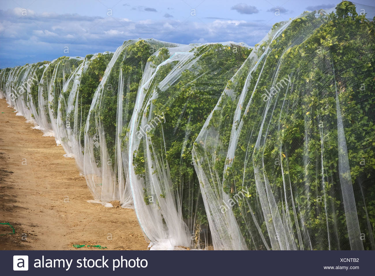 Netting Covering Stock Photos & Netting Covering Stock