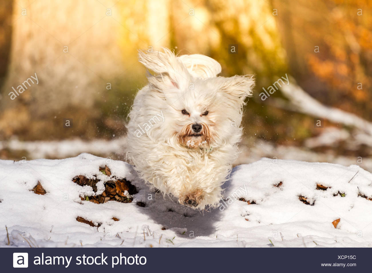 Hopping and jumping - Stock Image