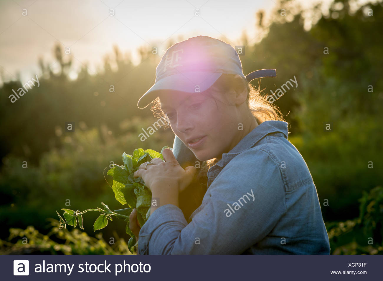 Woman harvesting vegetables in organic garden - Stock Image