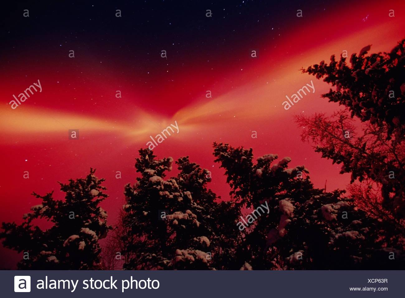 Intense Red Aurora & Spruce Trees Matanuska Valley AK - Stock Image