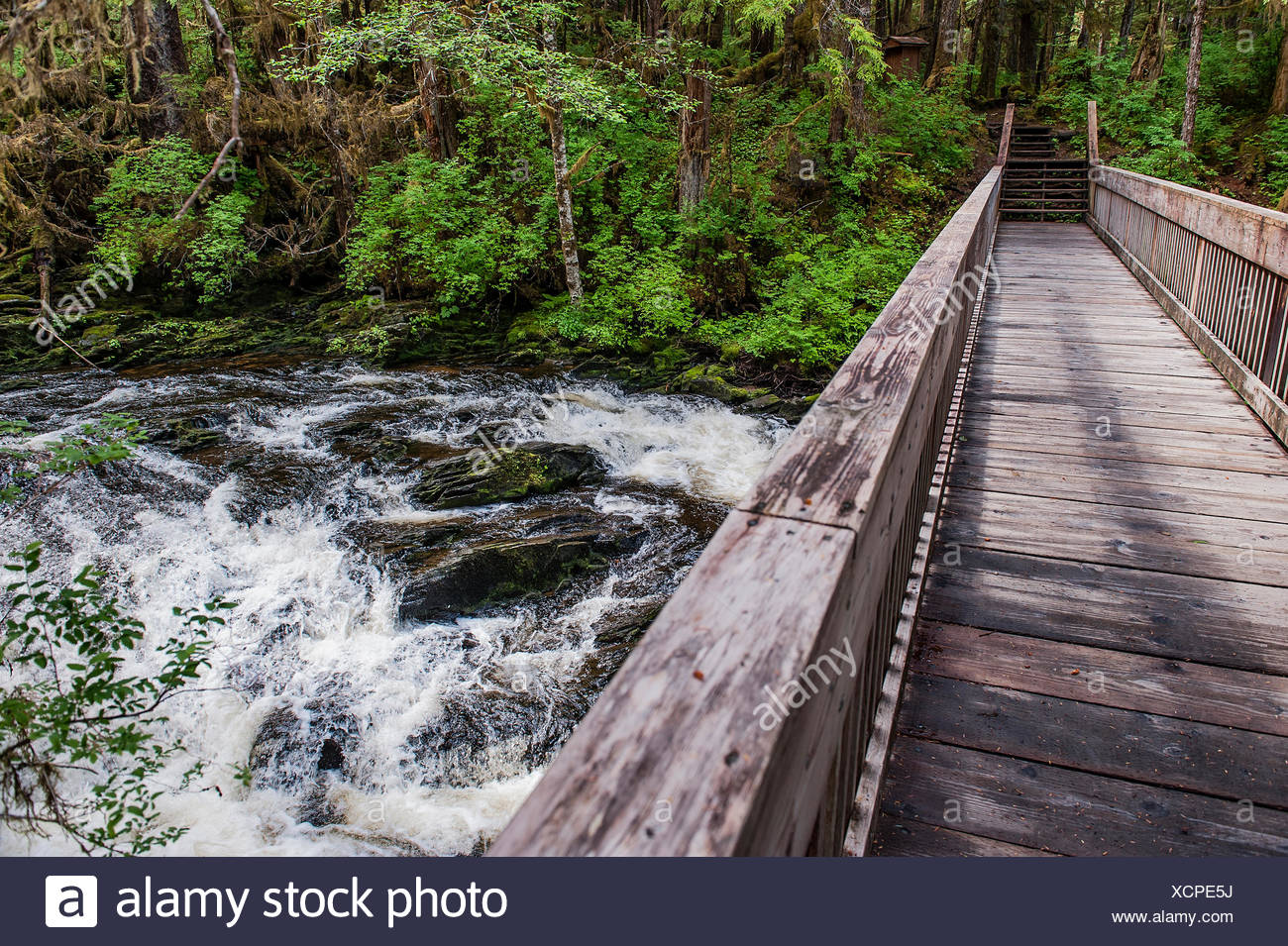 Wooden footbridge over a rushing stream in the temperate rainforest of Tongass National Forest, Ketchikan, Alaska, USA - Stock Image