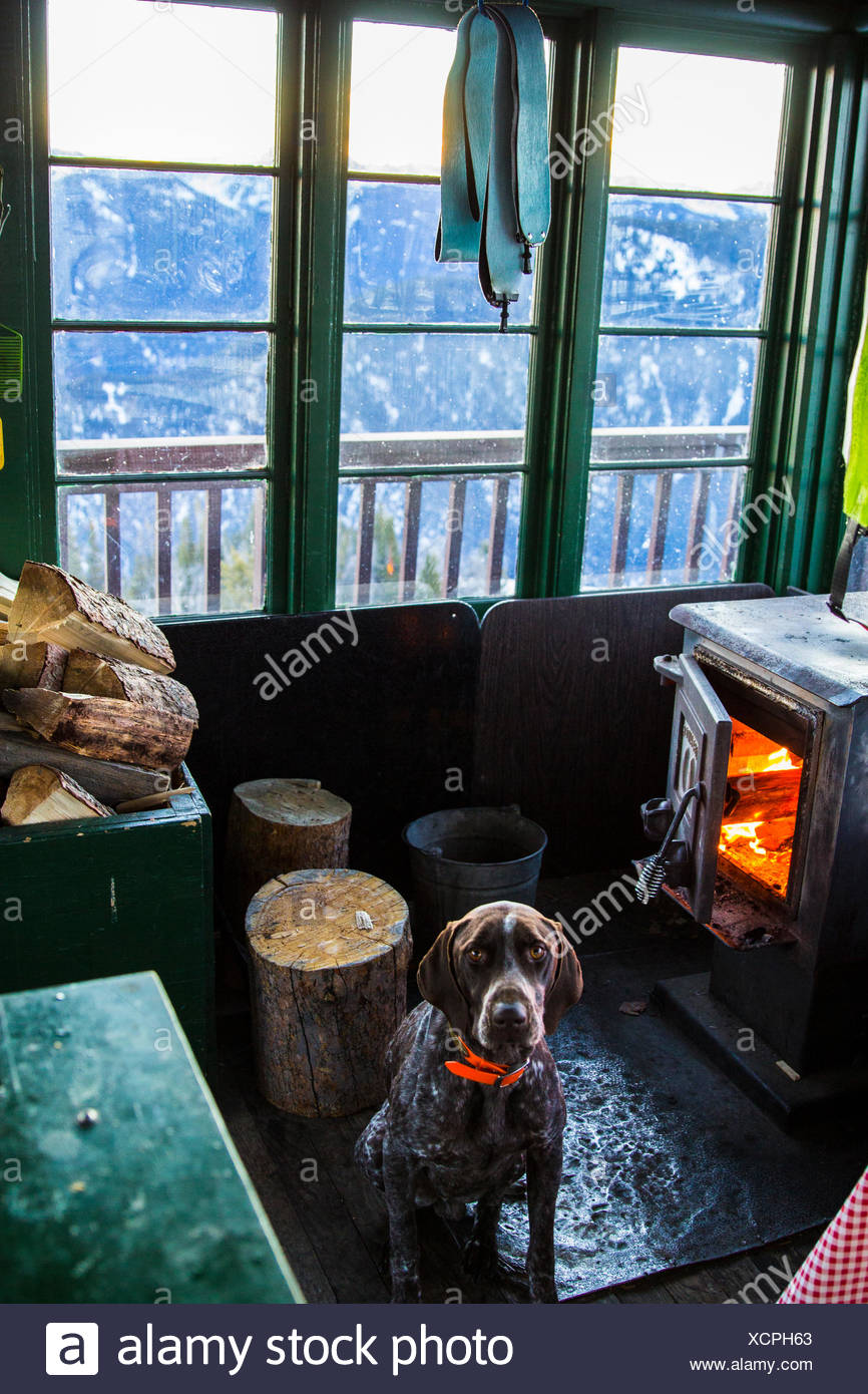 Dog sits in front of a fireplace in a fire lookout tower in Montana. - Stock Image