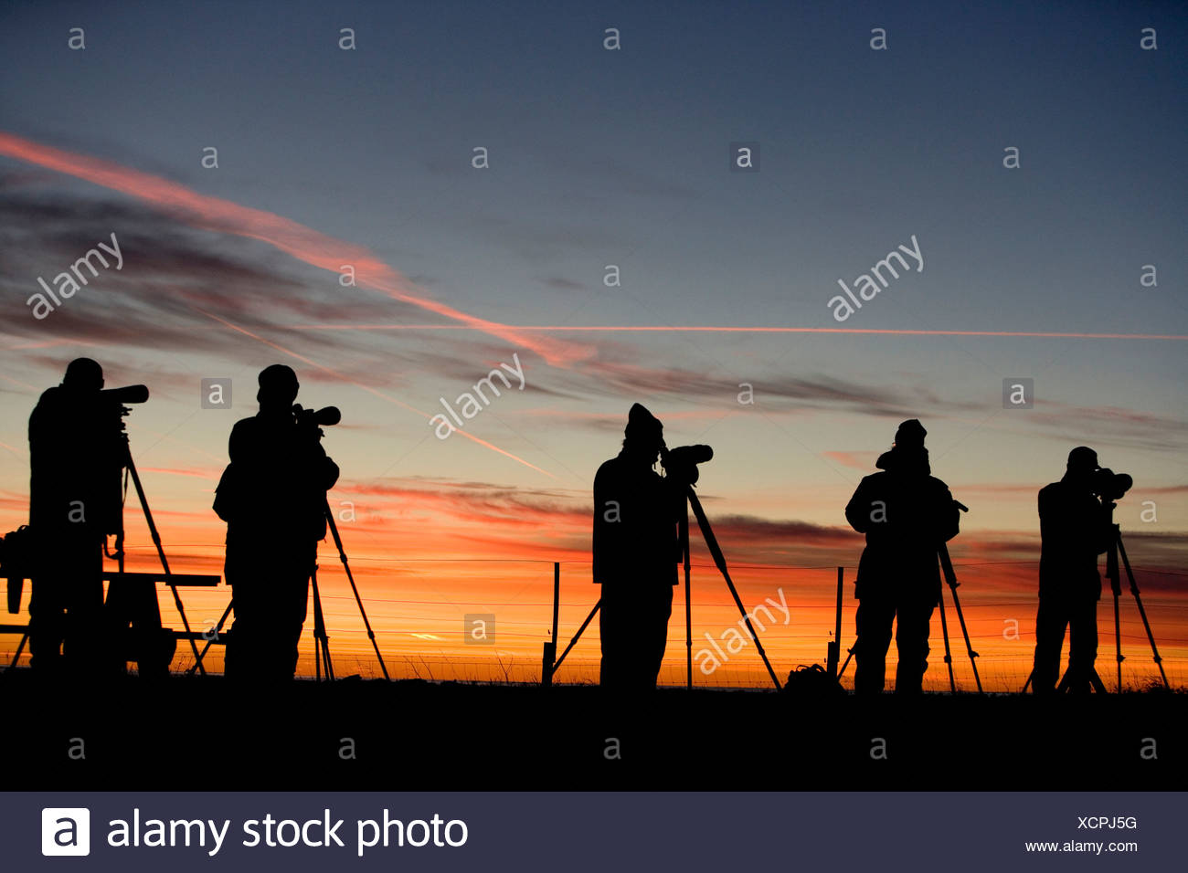Silhouette bird watchers in a line against dramatic sky at dawn - Stock Image