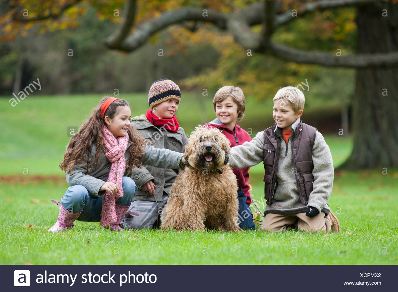 Springerdoodle Stock Photos & Springerdoodle Stock Images - Alamy