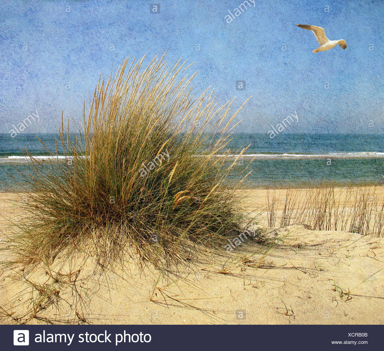 A seagull flying above a beach - Stock Image