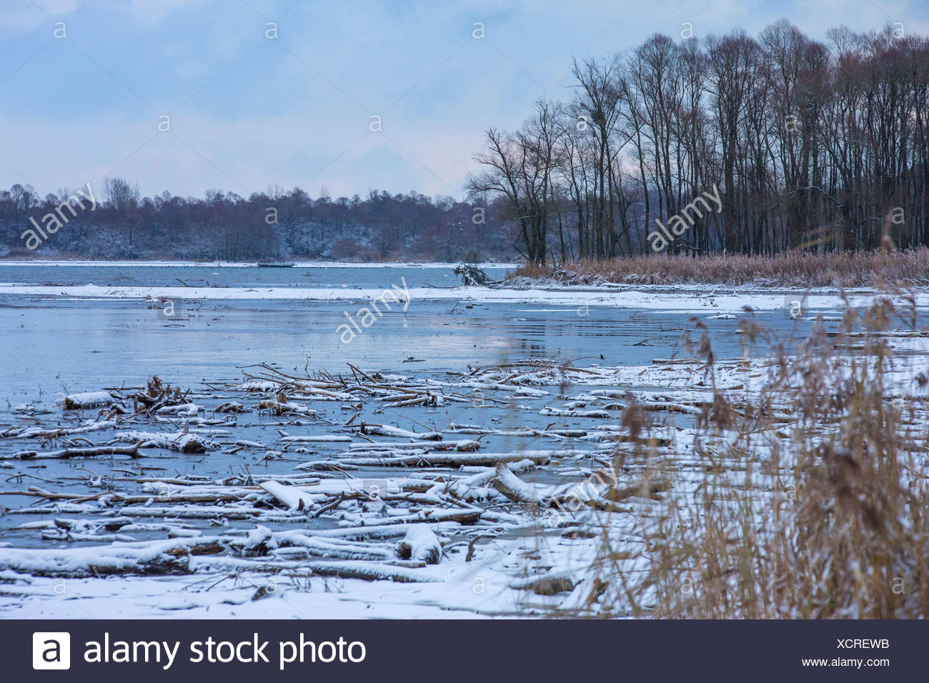 sedimentation zone Hirschauer Bucht  with dead wood in winter, Germany, Bavaria, Lake Chiemsee - Stock Image