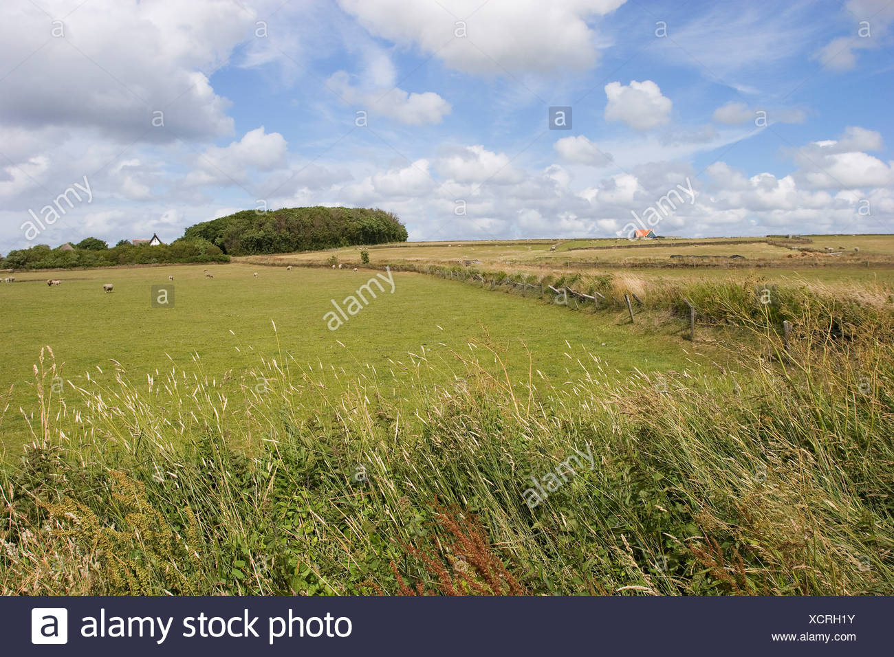 The 'hoge berg' at Texel has many natural fences made by sods. - Stock Image
