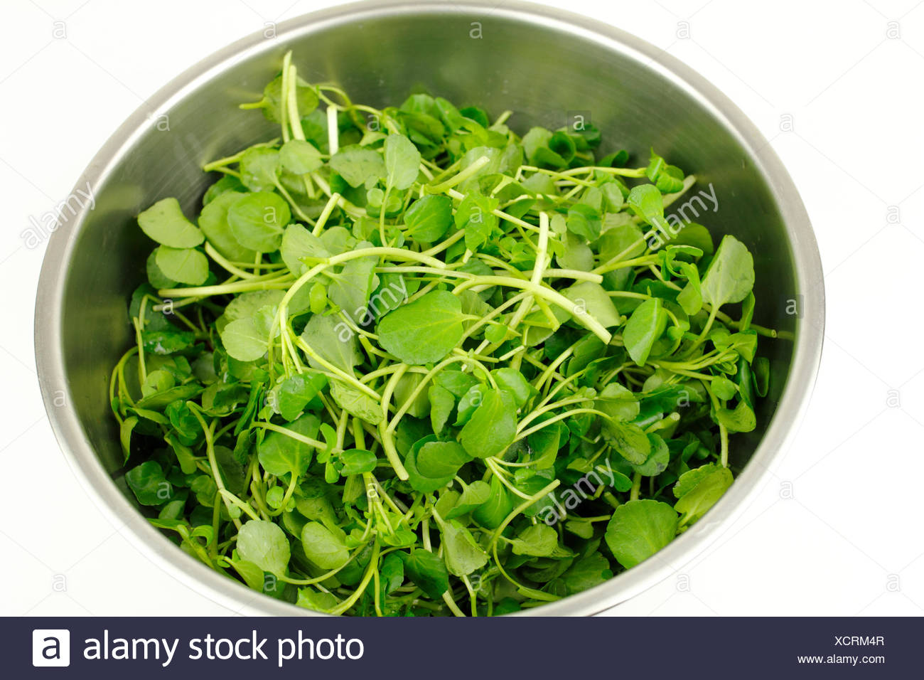 Close up of stainless steel bowl on white with small green watercress leaf vegetables used in salads and as a garnish for sandwiches because of itÕs delicious taste and healthy nutritional value. - Stock Image