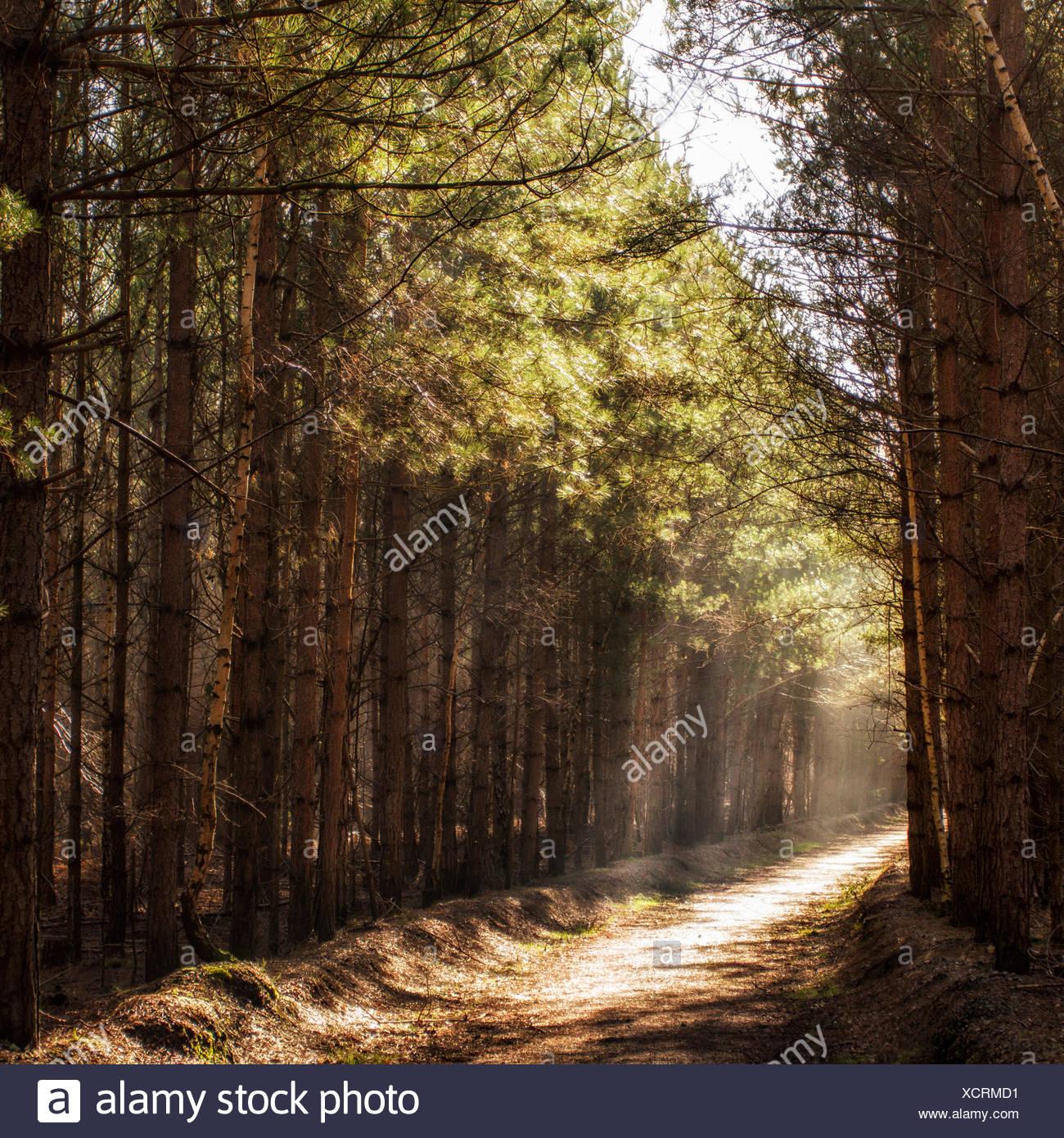 Morning light on woodland path - Stock Image