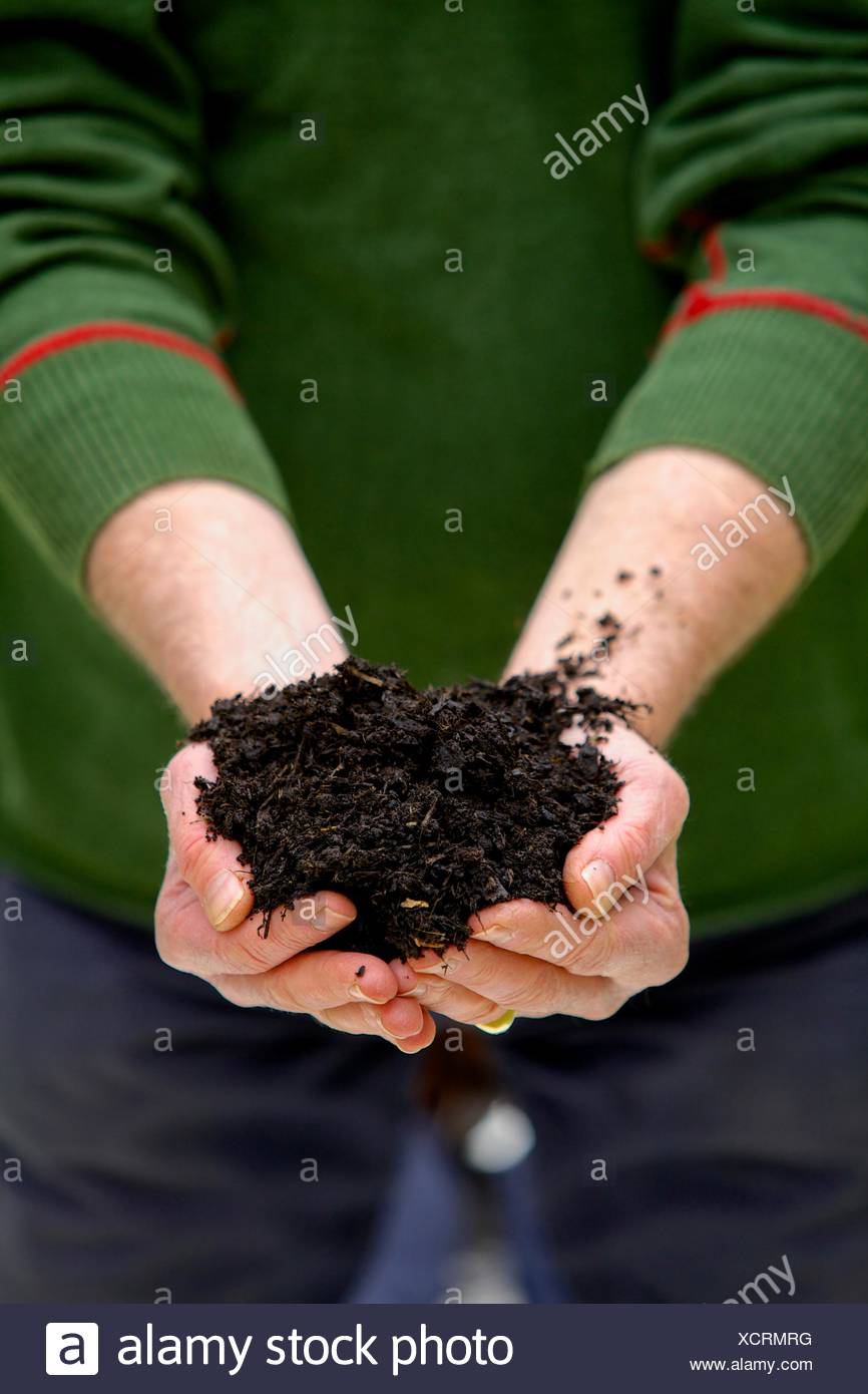 Plant food in man's hands - Stock Image