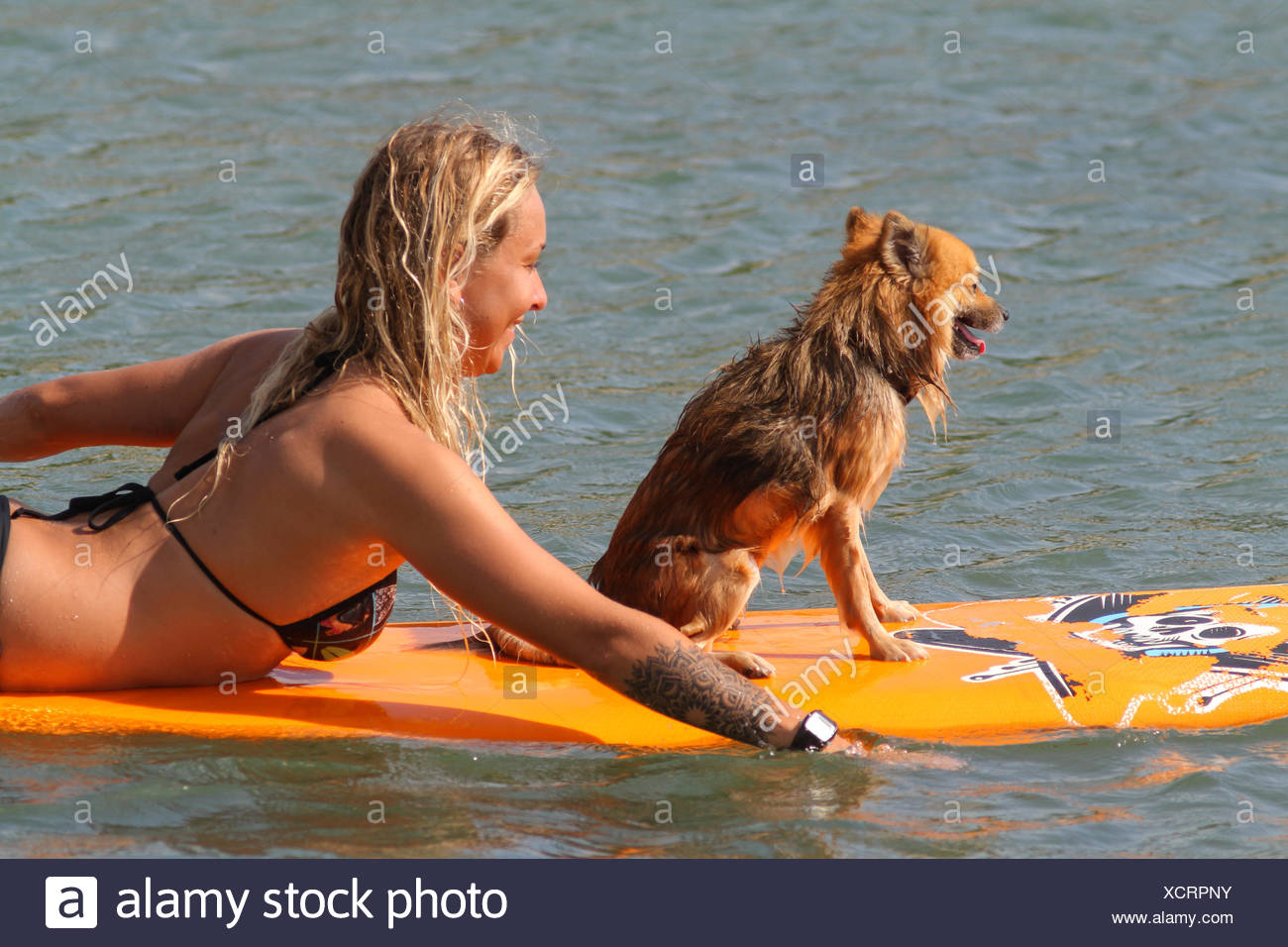 Surfer girl with a dog. - Stock Image