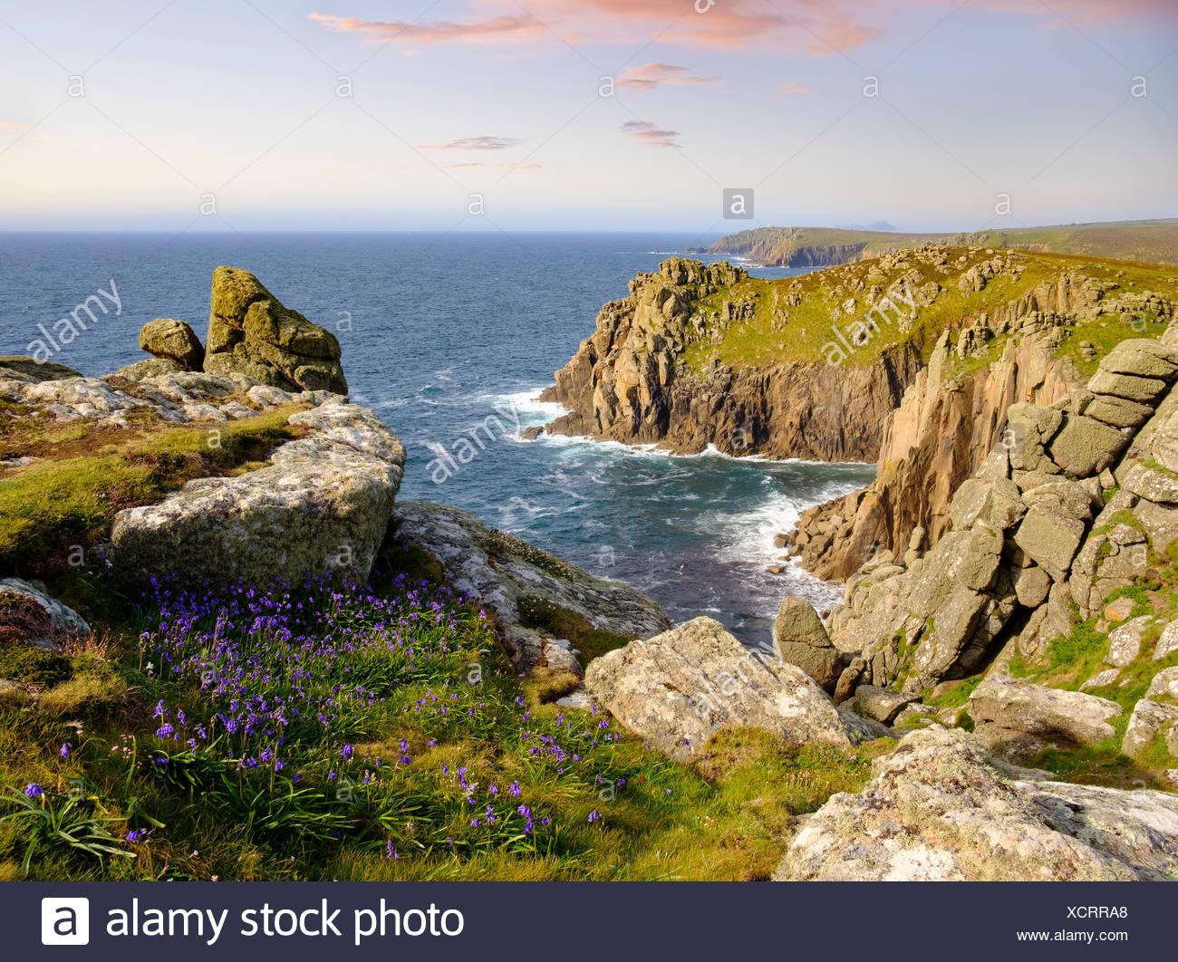 Atlantisches Hasenglöckchen (Hyacinthoides non-scripta), Steilküste, Land's End, Cornwall, England, Großbritannien Stock Photo