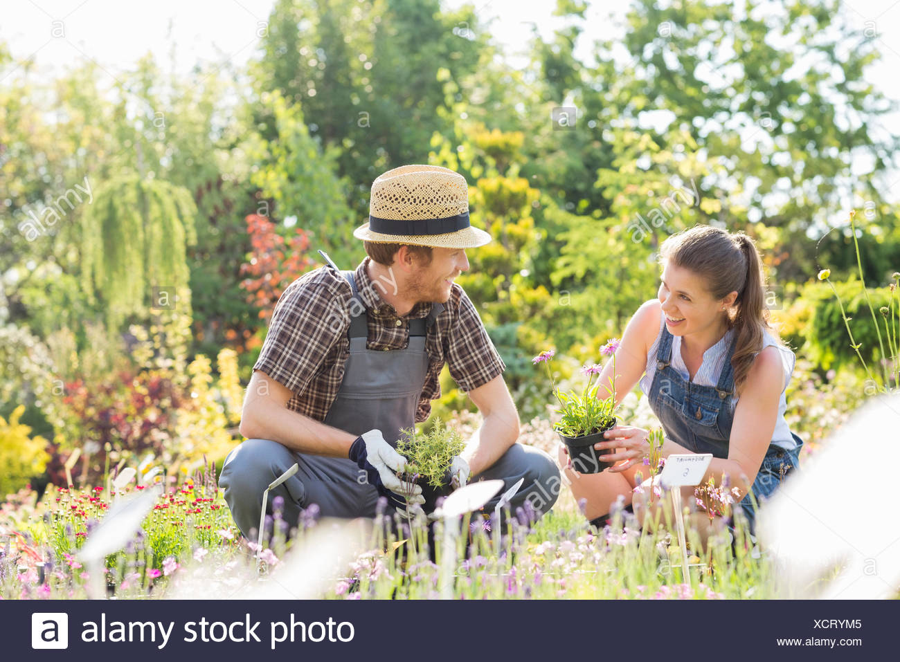 Gardeners talking while gardening at plant nursery - Stock Image