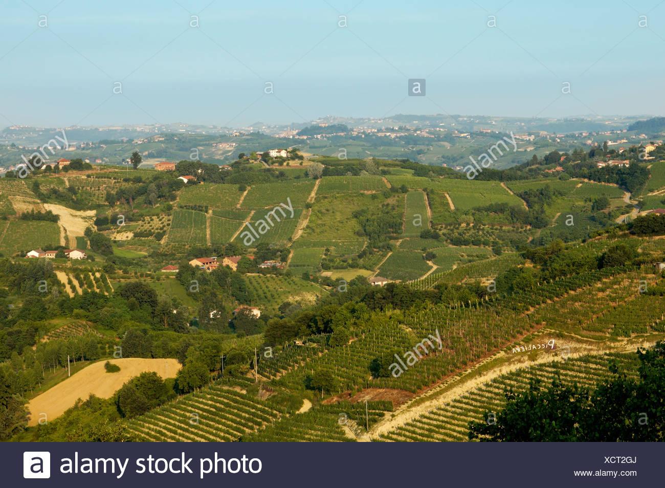 Near Cisterna d´ Asti at the Roero Piedmont Italy in the vineyards Stock Photo