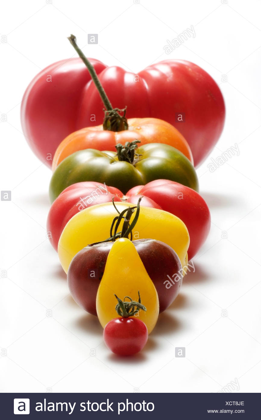 Tomato varieties in a row by size - Stock Image