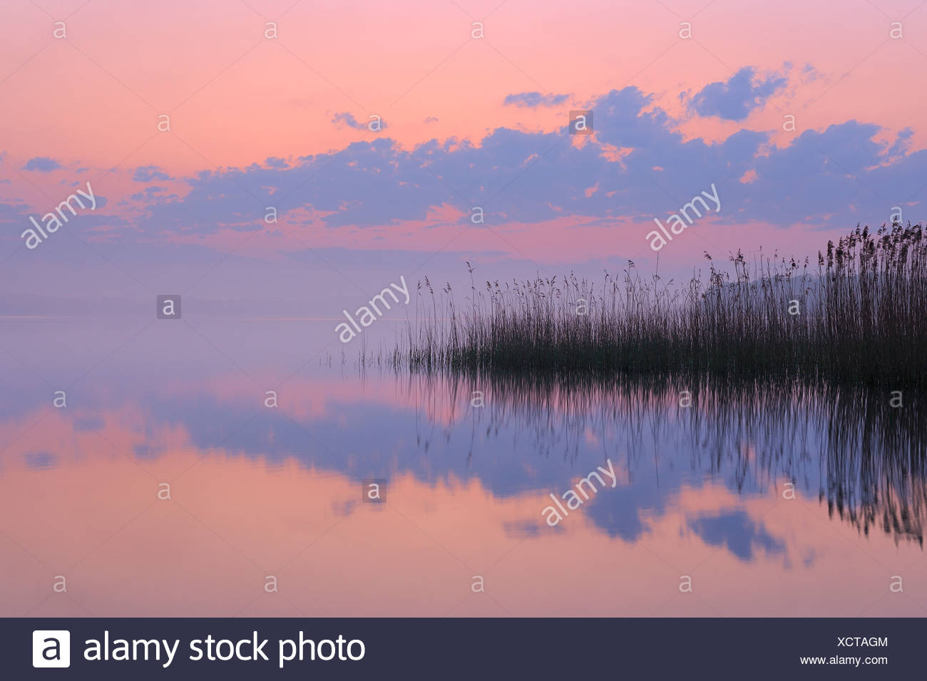 Germany, Mecklenburg-Vorpommern, Mecklenburger Seenplatte, Plau am See, View of sunrise with reeds and reflection in lake - Stock Image