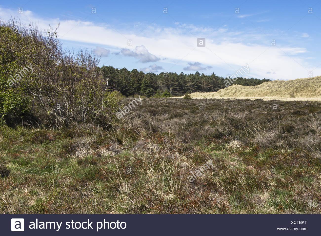 Varied landscape - Stock Image