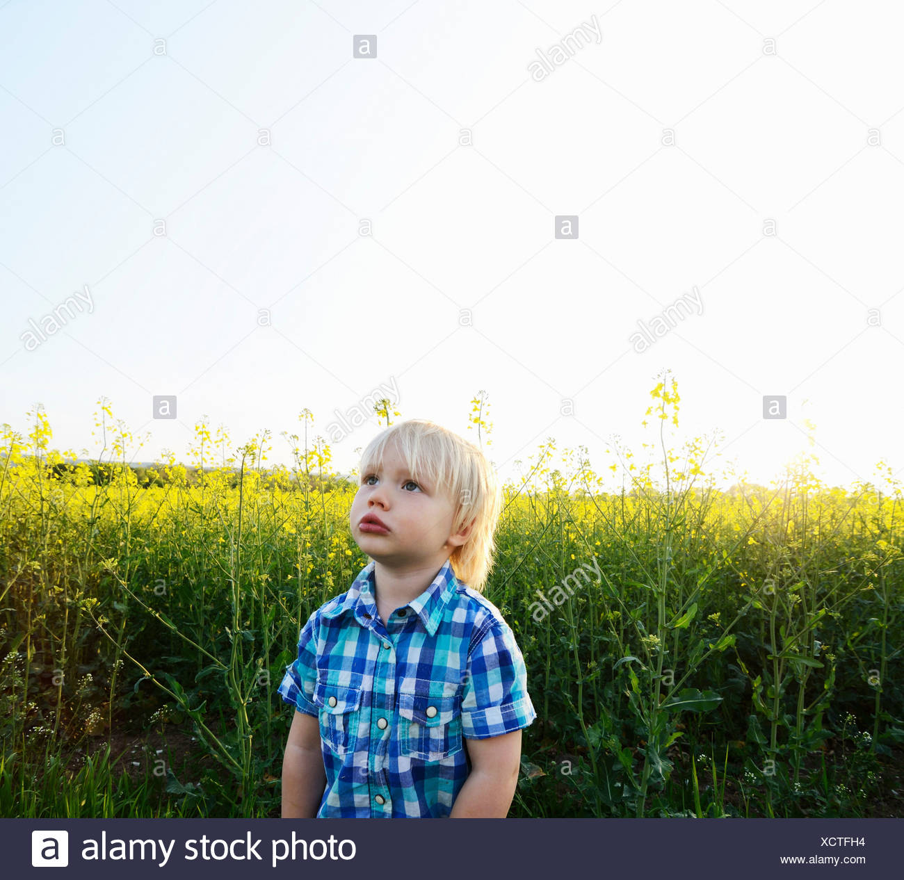 Boy standing in field and looking up - Stock Image