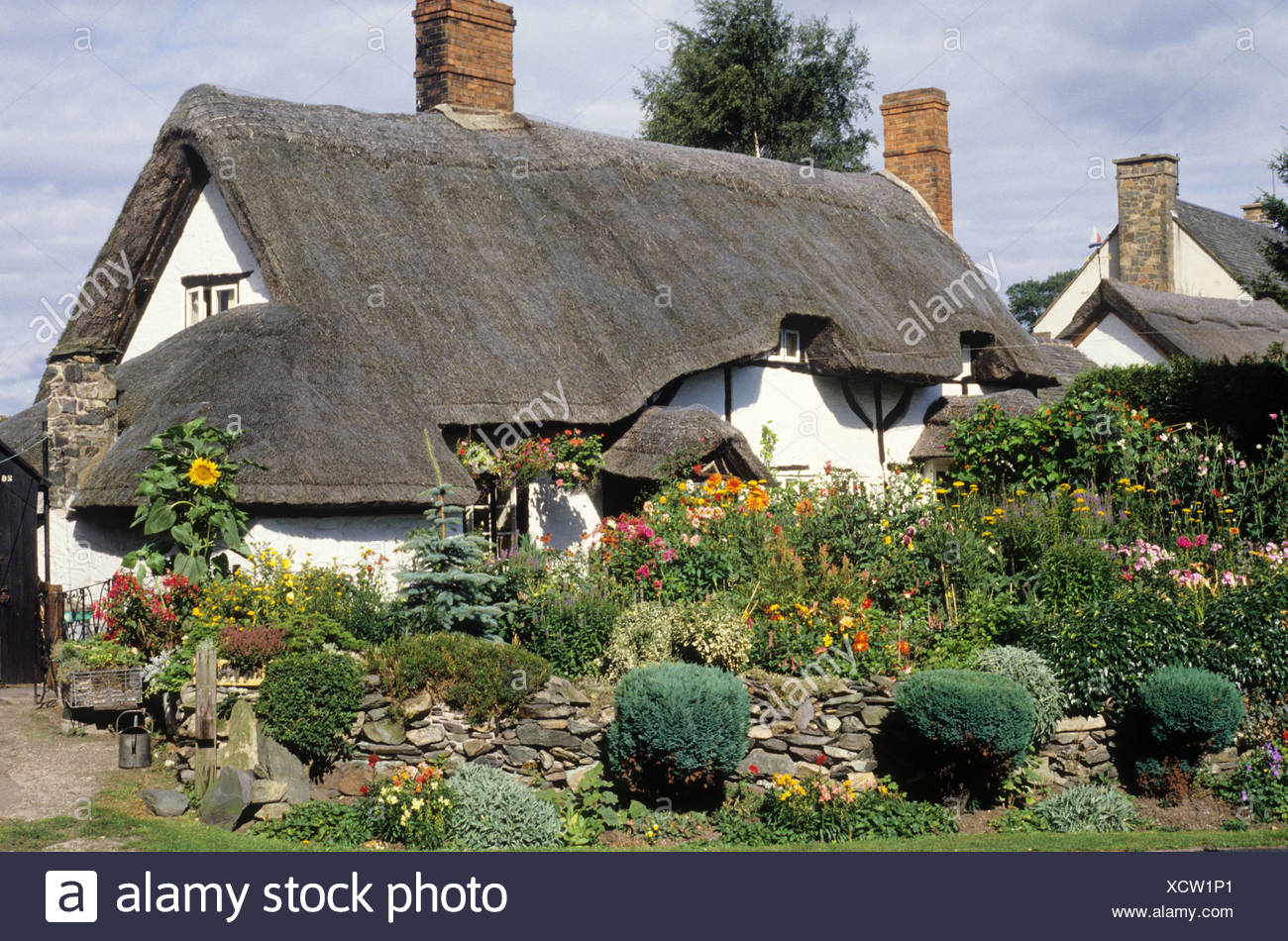 Traditional English Thatched Country Cottage Pest Cottage Woodhouse Leicestershire garden flowers plants charm charming peaceful - Stock Image