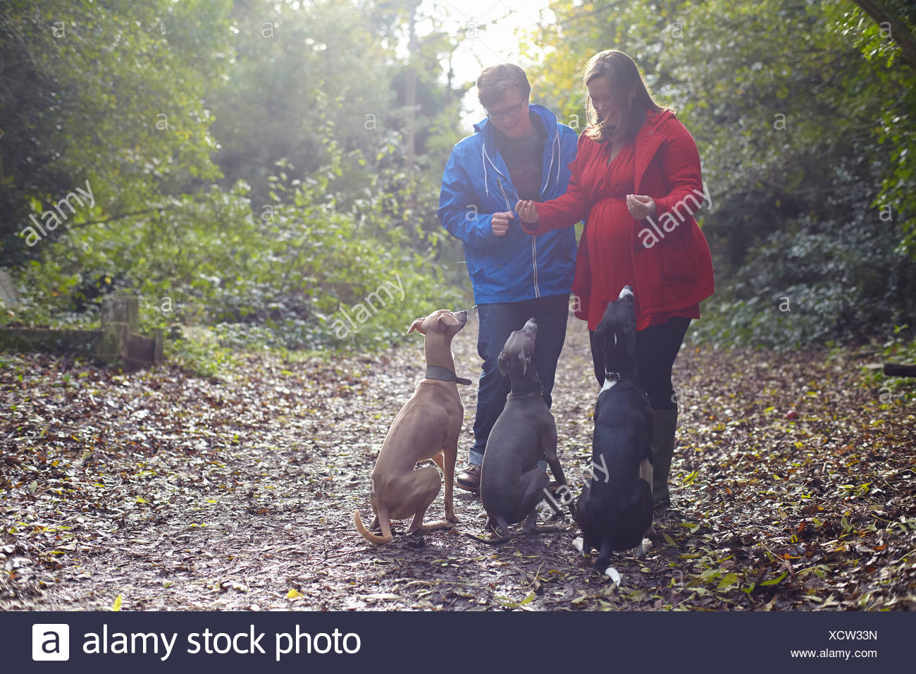 Young couple and their three obedient whippets in woods Stock Photo