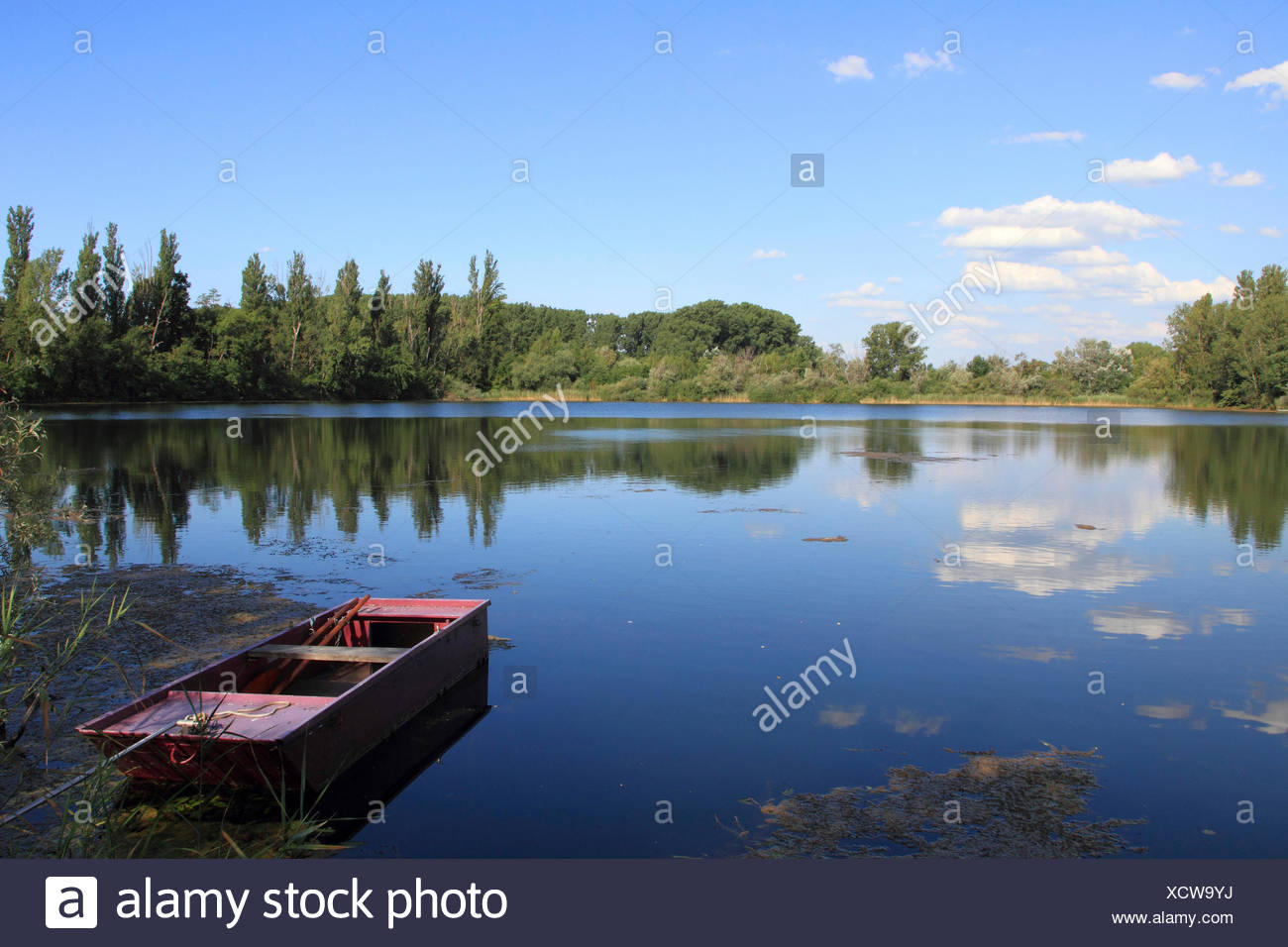 oxbow lake Altrhein with wooden boat in summer, Germany - Stock Image