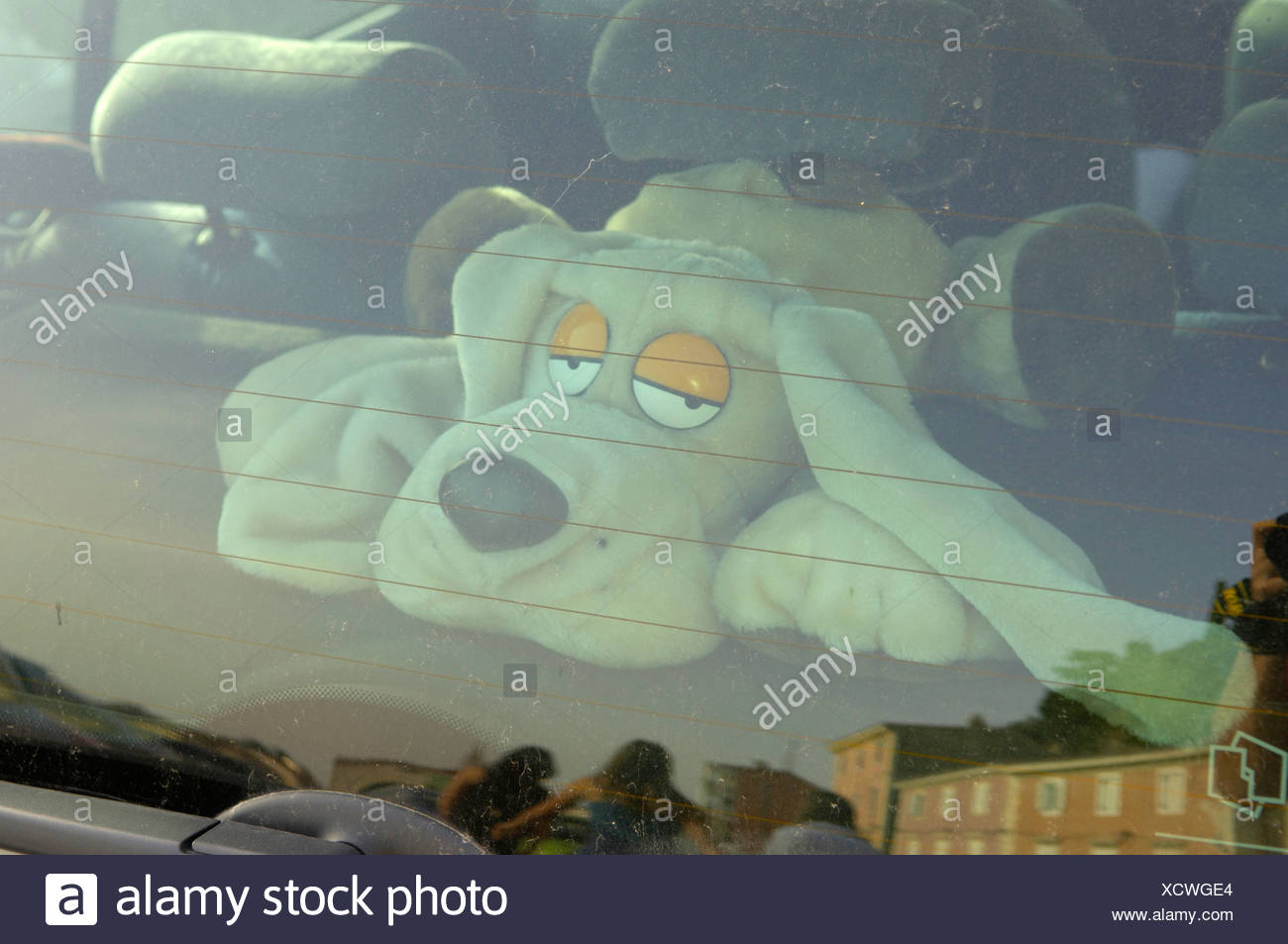soft toy behind rear window - Stock Image