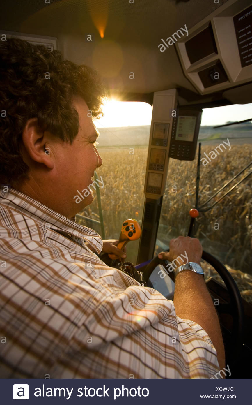 View from inside a combine cab of a farmer operating the combine during the corn harvest / near Northland, Minnesota, USA. - Stock Image