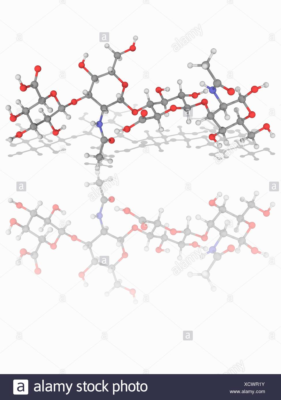 Hyaluronic acid. Molecular model of two units of the glycosaminoglycan polymer hyaluronic acid (C14.H21.N.O11), also known as hyaluronan. A polymer of disaccharides, it is an important component of articular cartilage and of skin, where it is involved in tissue repair. Atoms are represented as spheres and are colour-coded: carbon (grey), hydrogen (white), nitrogen (blue) and oxygen (red). Illustration. - Stock Image