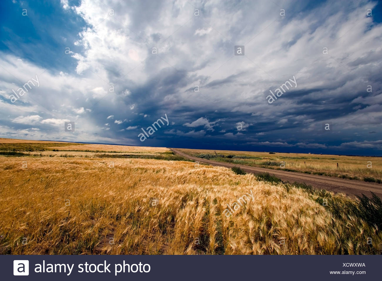 Thunder Storm, Crowfoot Ferry, Alberta, Canada, grain, agriculture, Cloud, weather - Stock Image