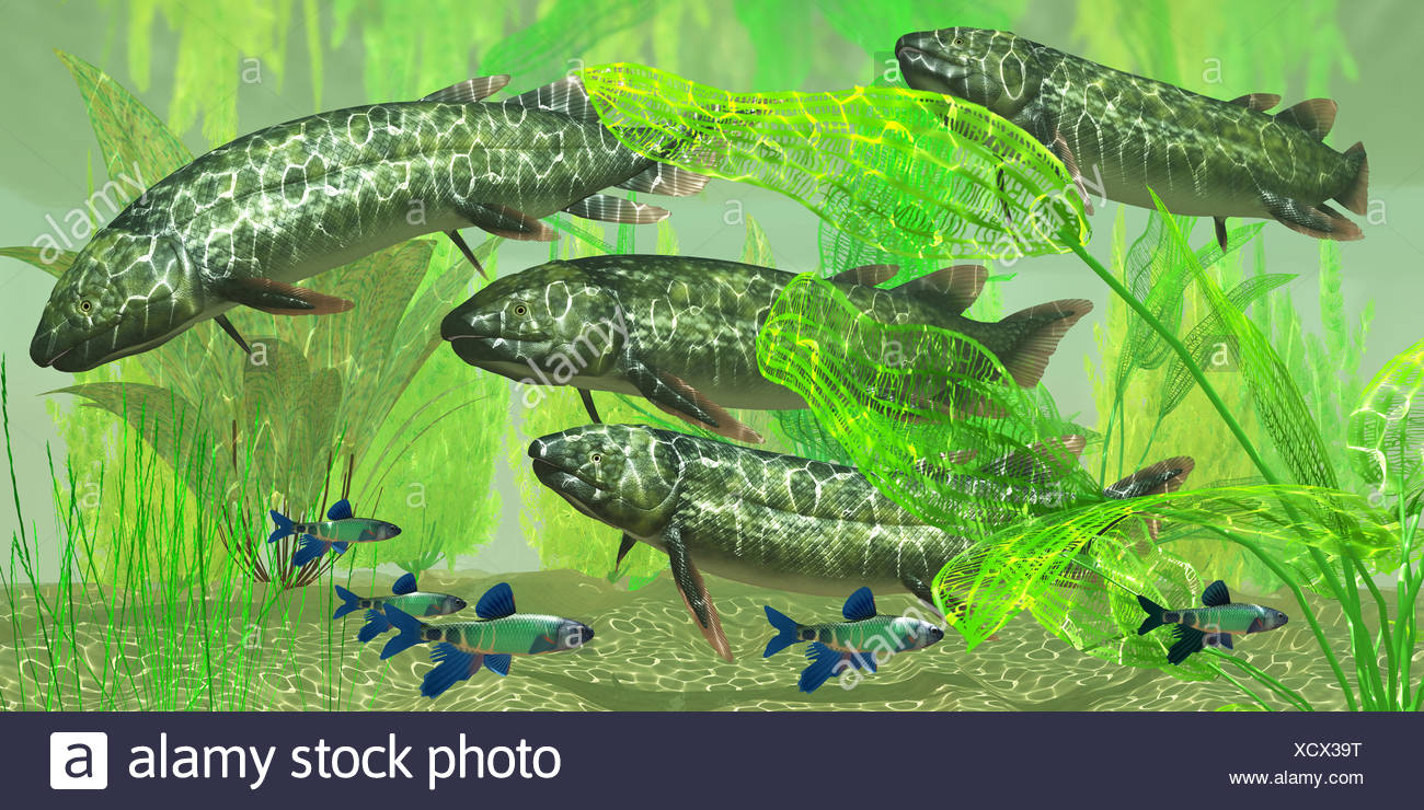 Dipterus macrolepidotus Fish - Stock Image