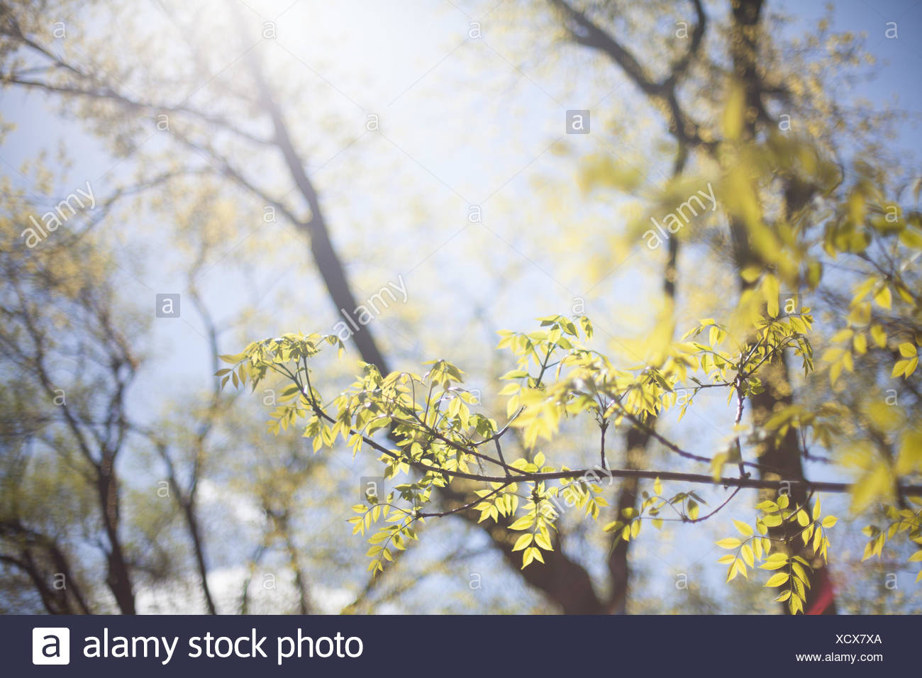 Close-Up Of Twig - Stock Image