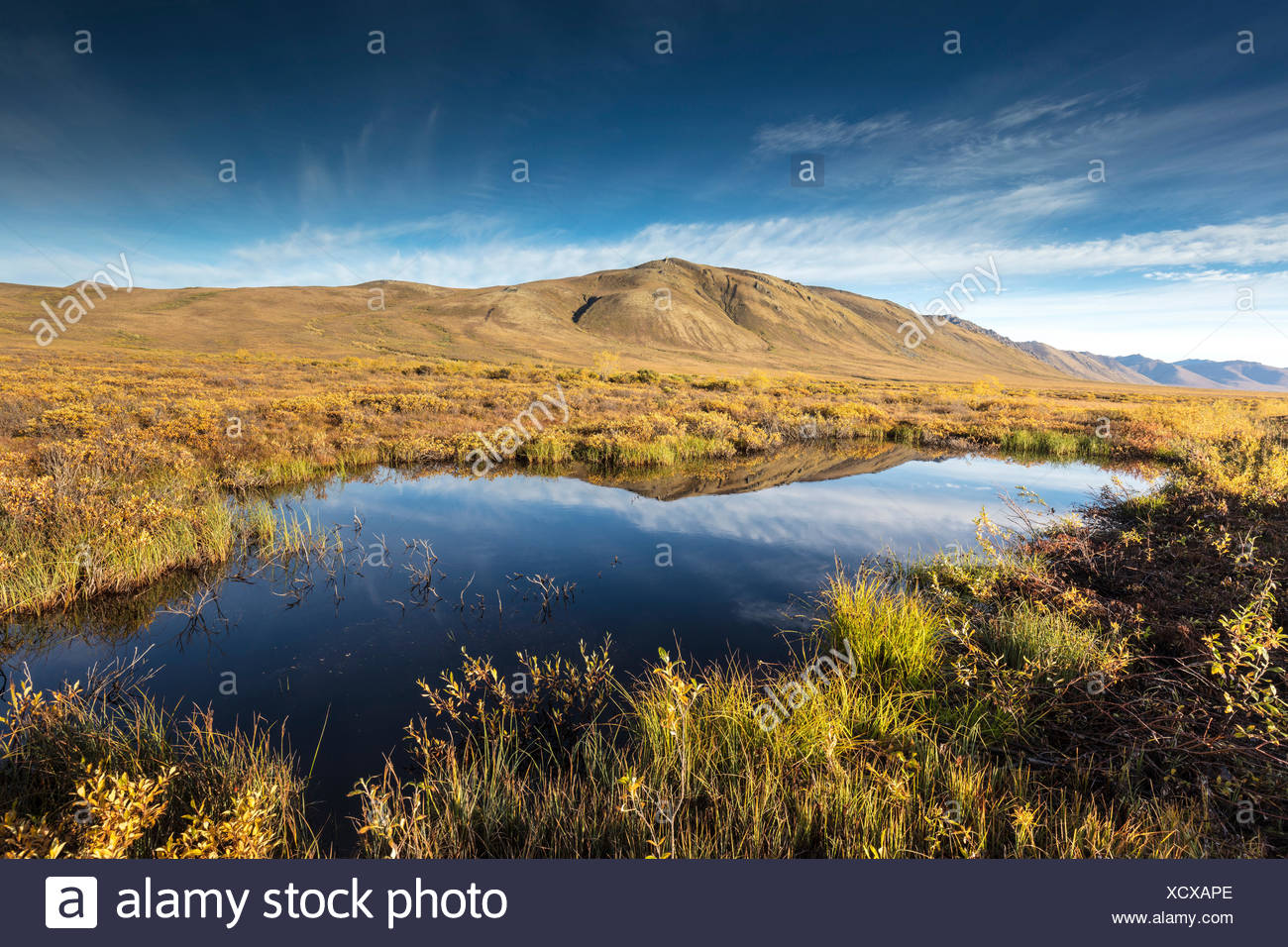 Surfbird Mountain reflection, Tombstone Territorial Park, Yukon, Canada - Stock Image