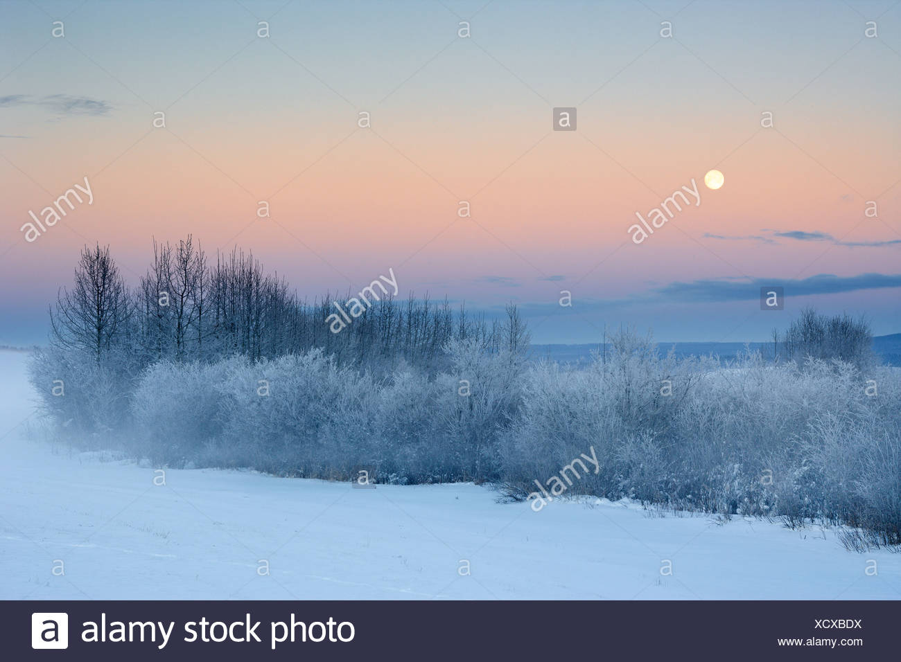 Trees and pasture in fog, Water Valley, Alberta, Canada. - Stock Image