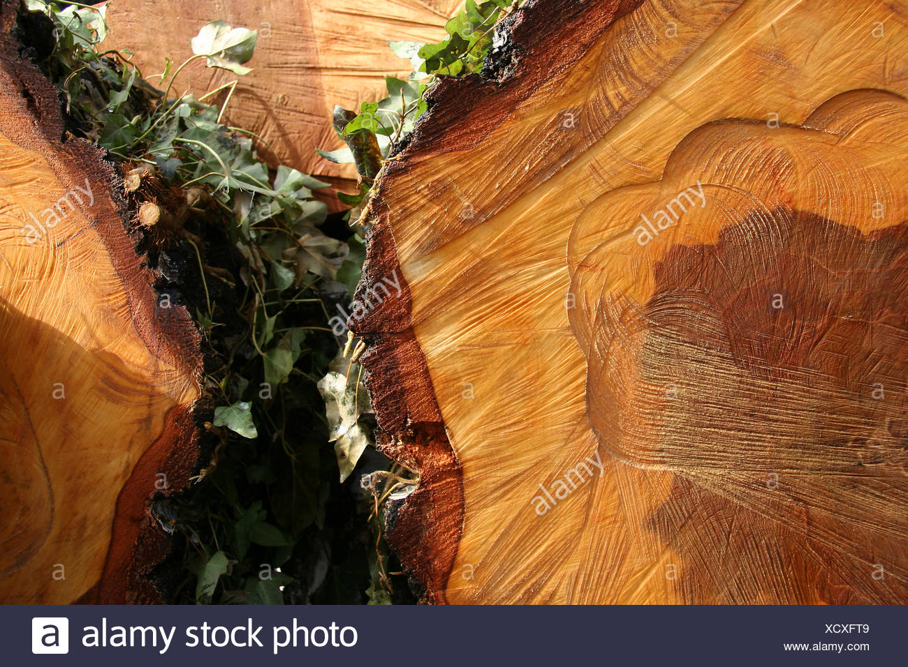 wood,grain - Stock Image