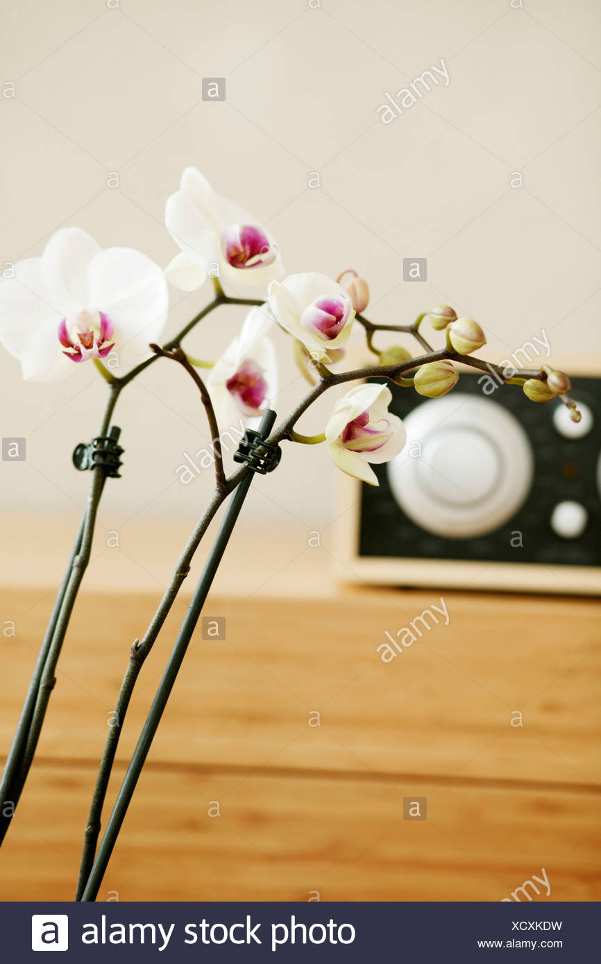 Orchids With Temperature Controller Stock Photo 283327797 Alamy
