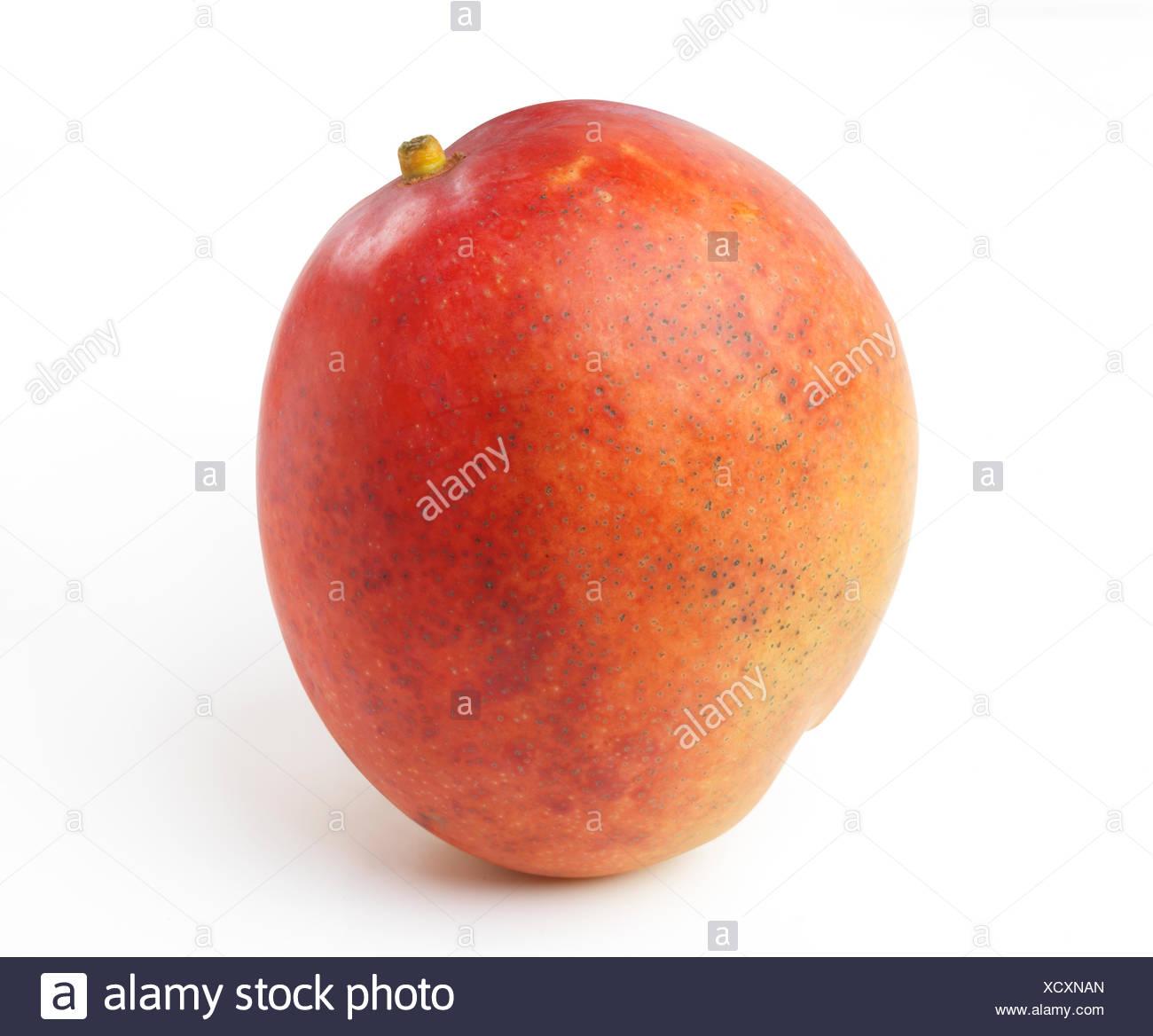 Ripe red Kent mango, closeup, tropical fruit, white background - Stock Image